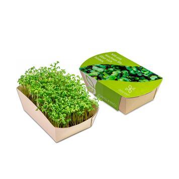 Mini giardino in scatola promozionale